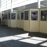 Montando a exposición en Pontevedra