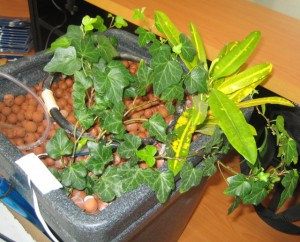 Cultivo Hidropónico