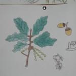 A Vexetación Autóctona de Oleiros